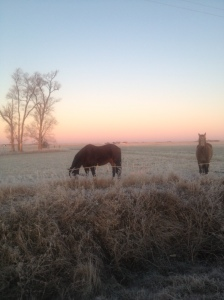 Out grazing on a beautiful winter morning...