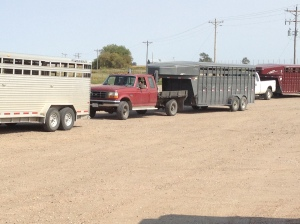 Sometimes the calves ship from the home ranch in stock trailers like these, and sometimes they come on a semi-truck...