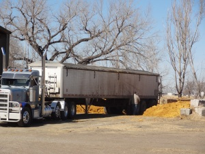 A semi-truck delivering wet distillers grains feed...Before a storm we want to make sure that we have several days of feed in inventory so that feeding will not get interrupted in the case that transportation or commerce gets disrupted...