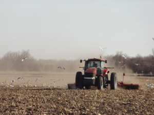 "Here the tractor is ""packing"" the soil so that it is smooth and level to plant seed into..."