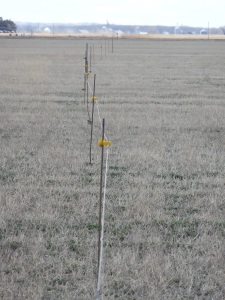 The temporary winter fence on the field by my house...
