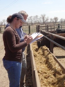 Checking feed bunks, water tanks, and cattle home pens during an audit...