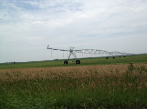One of the places that we grow prairie hay grass is on pivot corners where we must grow a dry-land (non-irrigated) crop...