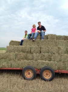 The horses will be well fed this winter, and some of this hay will also go to the feed yard...