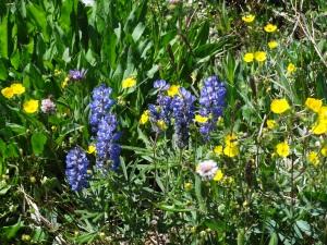Nature's Bouquet!