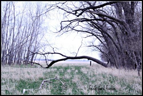 pasturetree.jpg