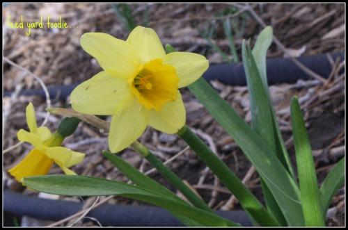 yellowflower.jpp