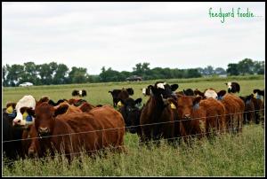 cattlepasture2014.jpg