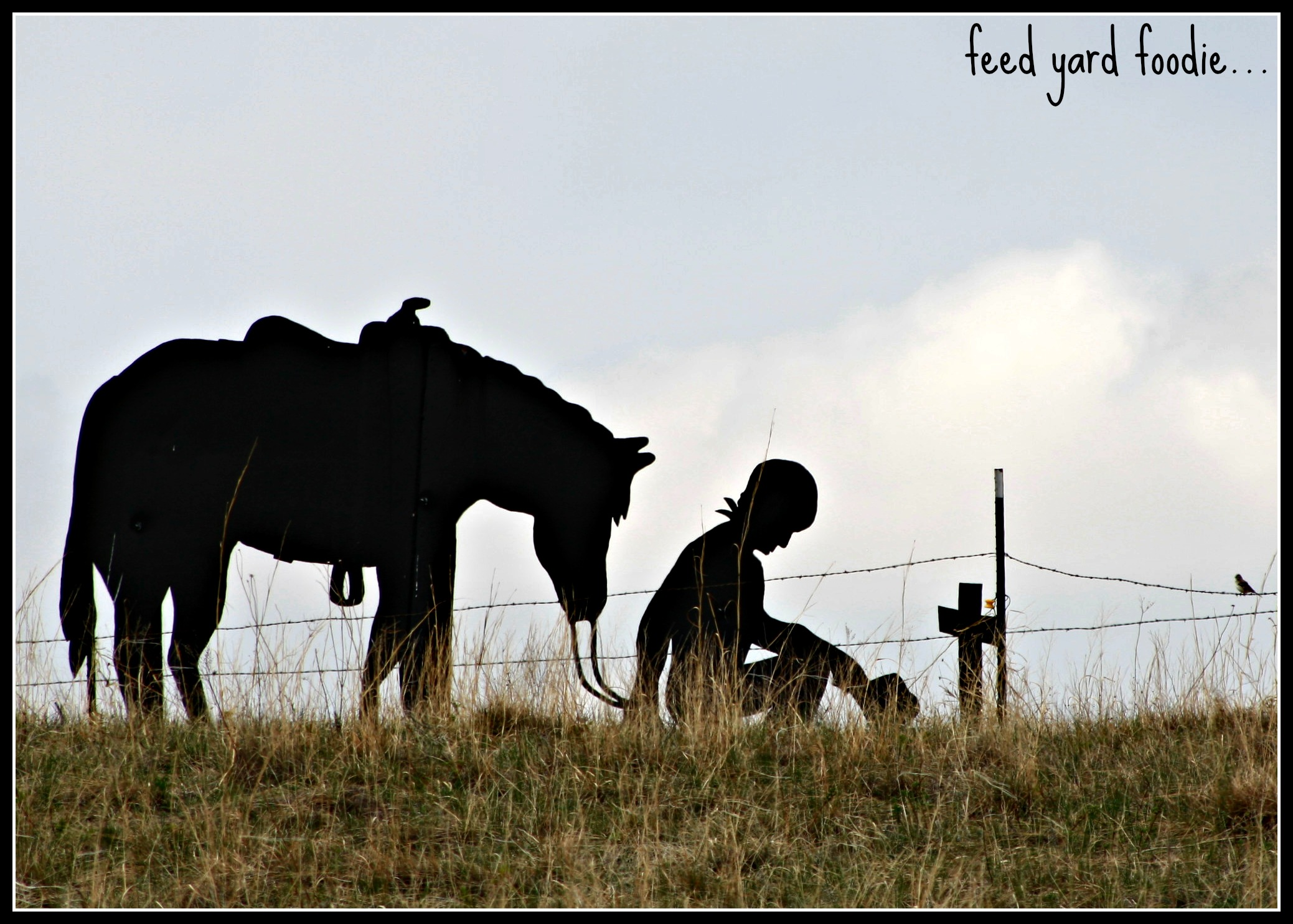 Feed Yard Foodie | A foodie running a cattle feedyard in