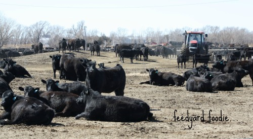 As a CAFO, my cattle farm is already under the jurisdiction of the EPA as the farm has held an NPDES permit through the agency for more than 20 years.