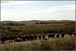 The breeding herd remains on the home ranch...