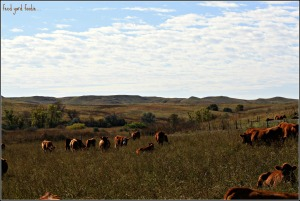 Fall on the ranch is breathtakingly beautiful...