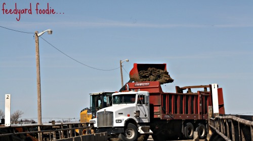 Loading the manure from the cattle pen to the manure truck for transportation to a crop field for application...