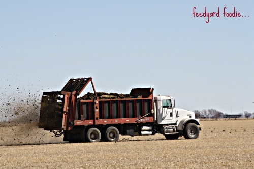 We spread manure on each of our crop fields approximately every 7 years.  Here is manure from the feed yard being applied to an old alfalfa field that will be torn up and planted to corn for a one year rotation before being planted back to alfalfa...