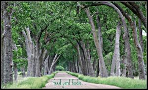 pasturetrees.jpg