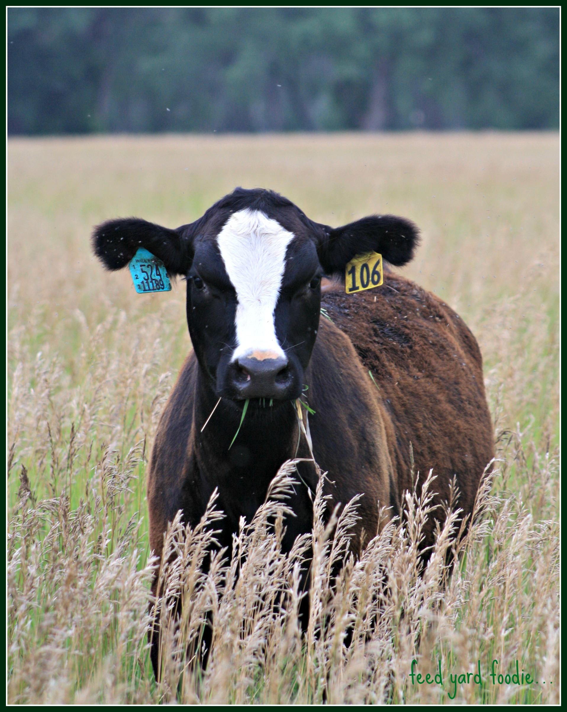 Feed Yard Foodie: Certified Angus Beef